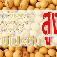 กากถั่วเหลือง อาหารสัตว์ที่เป็นที่นิยม เพราะประหยัดและคุณค่าสูง