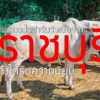 เพราะอะไร ฟาร์มวัวเนื้อจากราชบุรี ถึงได้รับความนิยม