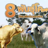 พันธุ์โคเนื้อ ที่นิยมเลี้ยงในประเทศไทย