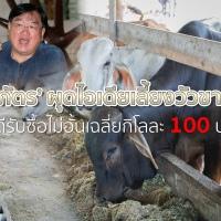 'ประภัตร' ผุดไอเดียเลี้ยงวัวขายจีน – ยินดีรับซื้อไม่อั้นเฉลี่ยกิโลละ 100 บาท